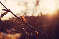 Hope (Moustafa Kzaiha) Tags: camera autumn light sun plant blur fall nature colors beautiful leaves germany hope focus day alone bokeh outdoor sony sunny moment a7