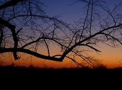 February sunset (LaLa83) Tags: blue winter sunset ohio sky orange tree evening backyard branch dusk sony horizon february alpha a230 50mmprime fairfieldcounty ruralohio stoutsville ohiofoothills