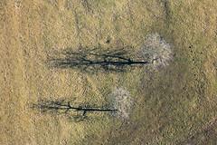Two Tree Shadows (Aerial Photography) Tags: by landscape la aerial landschaft deu luftbild conservationarea naturschutzgebiet landshut luftaufnahme bayernbavaria deutschlandgermany naturalreserve nsg truppenübungsplatz ndb standortübungsplatz 11012008 fotoklausleidorfwwwleidorfde nsgtruppenübungsplatzlandshut 5d028229 nsg0059301