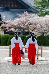 Monjes (Picardo2009) Tags: travel people japan cherry temple couple shrine gente blossom religion stock monks sakura meditation tradition japon templo izumo izumotaisha picoftheday shintoism flickrtravelaward