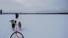 Lapland-0285 (EB_Creation) Tags: lapland sweden snow holidays vacation fantastic