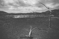 Lac de Yaté . Nouvelle-Calédonie (Roxanne Gauthier) Tags: voyage lac paysage fer désert randonnée parcdelarivièrebleue terreocre barrage terreferreuse barragedeyaté lacdeyaté forêtnoyée sablesmouvants nouvellecalédonie