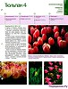 Комнатные и садовые растения от А до Я 52 15