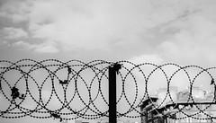 Barbed Wire (BakiOguz) Tags: white black wire barbed