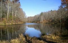 Fall Lake (courtcourt42) Tags: autumn trees fall bare foliage