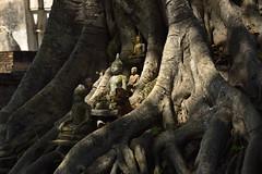 _GRL7653 (TC Yuen) Tags: architecture thailand ruins asia southeastasia buddha unesco worldheritage norththailand ancientcapital
