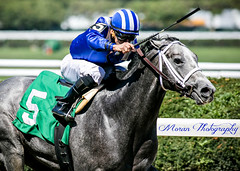 Mohaymen (EASY GOER) Tags: horses horse ny sports canon racing 5d athletes equine thoroughbreds markiii