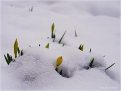 Déjà le printemps ?