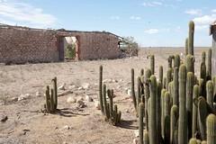 of (The Dent.) Tags: house abandoned broken death solitude farm failure grapes heat dreams flies despair series misery wrath steinbeck