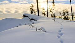 cat over the edge (useless no more) Tags: winter snow arctic subarctic northerncanada canadasnorth scottlough