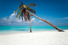 Crutch (Claire Willans) Tags: ocean travel blue vacation sky holidays asia paradise turquoise indianocean palm palmtree tropical maldives prop crutch meeru turquoisewater