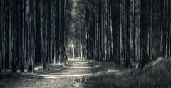 Path (DaOpfer) Tags: trees light blackandwhite panorama forest germany way de landscape bayern licht pentax path motionblur wald bume krn k7 sigma30mmf14exdchsm schwarzweis barmsee zugspitzland
