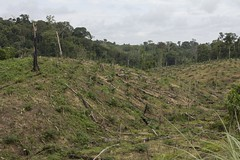 Forest cleared for oil palm (World Bank Photo Collection) Tags: forestry worldbank cameroon deforestation oilpalm
