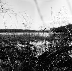 Fuji Neopan Acros 100 (joshwiederin) Tags: blackandwhite minnesota fuji stpaul 120film fujifilm neopan saintpaul acros crosbylake fujiacros filmphotography fujiacros100 fujineopanacros crosbyfarmpark