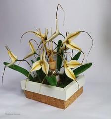 Masdevallia. Felt orchid plant. (pestinairina) Tags: plant orchid flower art arte felting felt feltro fiber fiore pianta orchidea fibra
