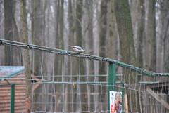 DSC_0029 (Rinswid) Tags: park nature animal spring kharkov feldman ecopark