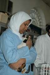 Cat receiving veterinary treatment, Egypt (Animal People Forum) Tags: rescue woman cats pets animals cat feline vet egypt stray shelter veterinarian mammals treatment veterinary streetcat companionanimals