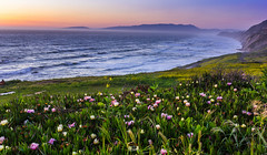 Fragrance (TanmayThakur) Tags: ocean sf sanfrancisco park ca flowers blue sunset wild mountains colors rock pacific background mussel foreground sanf musselrockpark addingcolorstopixels goldenhourxml