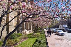 boston spring (p-ascoli) Tags: street flower church boston ma spring fuji massachusetts x sidewalk fujifilm fujix xpro2 fujifilmx fujixpro2 fujifilmxpro2