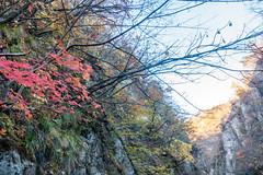 NarukoOnsen-56 (clouddra) Tags: autumn japan jp miyagiken narukogorge narukoonsen sakishi