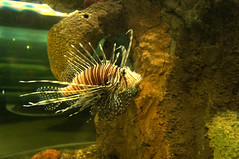 DSC03744 (emmanrog) Tags: peces animales marino acuario
