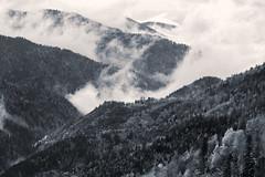 The zig-zag (RKAMARI) Tags: autumn trees light bw fall nature monochrome fog forest nationalpark cities bolu yedigller