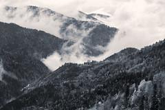 The zig-zag (RKAMARI) Tags: autumn trees light bw fall nature monochrome fog forest nationalpark cities bolu yedigller