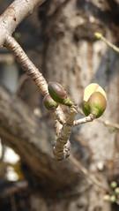P1050299 (Big Tree Chen) Tags: