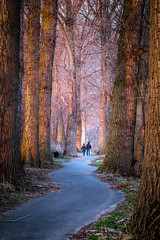 (lotl.axo) Tags: trees sunset nature germany landscape deutschland sonnenuntergang sundown natur pflanzen landschaft bäume goldenhour goldenestunde godorfwesseling