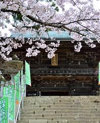 Tsukuba-Jinja (tokyobogue) Tags: mountain nature japan nikon shrine cherryblossom sakura jinja tsukuba ibaraki mttsukuba tsukubajinja nikond7100