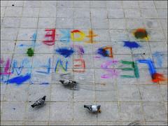 Les enfants de la fort (chando*) Tags: brussels birds writing pavement pigeons streetphotography bruxelles criture oiseaux trottoir montdesarts