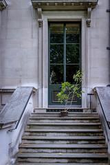 Open Garden Squares 2015 - 1824.jpg (DavidRBadger) Tags: city london steps 2015 cityofwestminster urbansquare opengardensquares thereformclub carltonhouseterracegarden