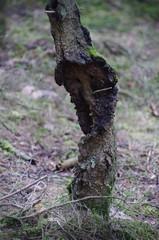 IMGP00009755-o (Thomas Sommer) Tags: tree diy bokeh baum xenar schneiderkreuznach 55200 zauberwald