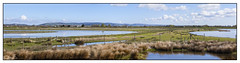 Goldcrest Newport (Mal.Durbin Photography) Tags: nature birds newport naturereserve newportwetlands maldurbin goldcliffnewport