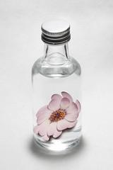 Daisy & Vodka ( calvin1961) Tags: macro canon daisy absolutvodka ef100mm eos6d ef100mmf28isusmmacro