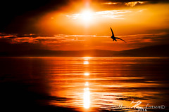 bird (Hasse Larsen) Tags: sunset sky sun water norway reflections nikon d100 midnightsun