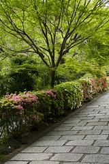 Manshu-in  (PV9007 Photography) Tags: new green japan stone garden temple japanese spring kyoto  april  azalea kansai garten frhling  steingarten sakyoku  japanischer 2016 tsutsuji  azaleen manshuin     shinryoku  sakyo  monzeki  aomomiji