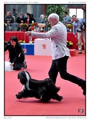 DSC_7274 (animalpicture.fr) Tags: de nikon canine exposition internationale centrale limoges d300 2016