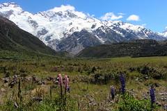 Mount Cook National Park (Alan1954) Tags: newzealand holiday snow mountains lupins 2014 mountcooknationalpark platinumheartaward platinumpeaceaward
