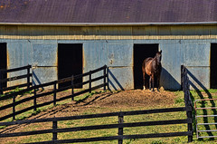 Good Morning! (creepingvinesimages - struggling to keep up!) Tags: county horses outdoors virginia nikon farm barns fences stalls topaz adjust autofocus hff albemarle d7000 pse14
