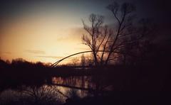 Sonnenuntergang ber dem Main... (hobbit68) Tags: old bridge sunset sky night clouds canon river boats wasser nacht outdoor alt frankfurt sommer main himmel wolken boote fluss sonne bltter sonnenaufgang baum steg sonnenschein brcken