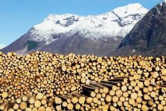 Tmmervegg -|- Timber wall (erlingsi) Tags: norway timber logs scandinavia sunnmre tmmer rsta