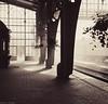 Lviv railway station (Andrey Baydak) Tags: railroad sepia train hall rivets platform eisenbahn railway bahnhof lviv railwaystation galicia artnouveau rails lightray 2470 вокзал lemberg львов riveted жд рельсы львів галичина уз укрзалізниця рейки