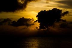 Atardecer en Isla Fuerte (Races annimas) Tags: costa arbol atardecer mar colombia pescador caribe pescar pelcano islafuerte arbolquecamina