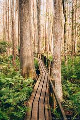 Cypress Swamp Trail (corran105) Tags: trees color green nature landscape nikon florida hiking swamp boardwalk cypress sebring naturalbeauty centralflorida floridastatepark highlandshammock highlandscounty cypressswamptrail
