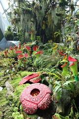 Lego Garden (Wormey) Tags: singapore marinabay 2016 gardensbythebay canon650d