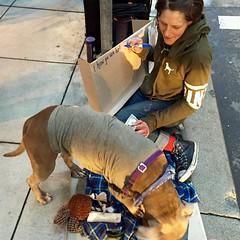 writer (vhines200) Tags: sanfrancisco dog sign homeless writer montgomerystreet panhandler 2016