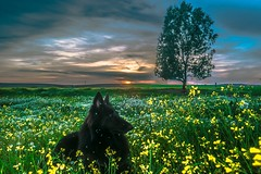 Flores de Invierno (abel.maestro) Tags: sunset espaa flores tree primavera sol arbol atardecer nice andaluca spain europa europe negro andalucia belga perro amarillo prado nut abel pastor ocaso amarillas