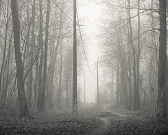 misty woods (SASHA TURPIN) Tags: trees winter blackandwhite bw mist france monochrome fog forest canon landscape woods moody path foggy 5d atmospheric electricposts 24105mm