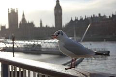 London (Paolo Fats) Tags: bird london tower westminster birds